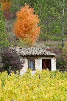 Weinberge in französischer landschaft, drome, clairette de die