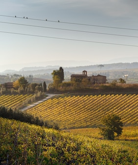 Weinberge in italien. foto eingelassene toskana am herbst.