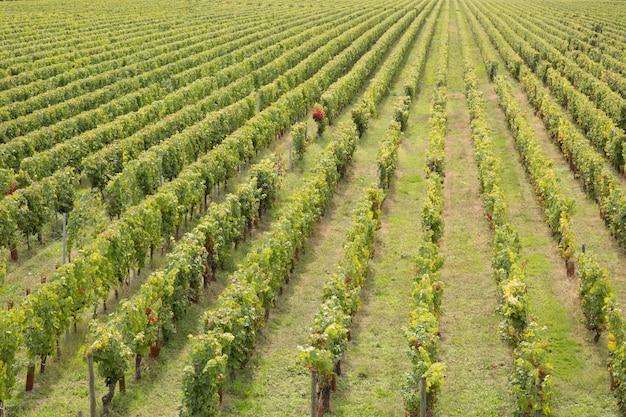 Weinberglandschaft im südwesten von frankreich bordeaux europa