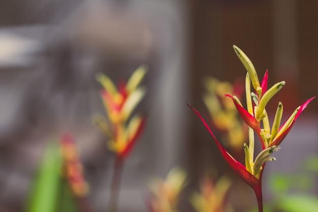 Weinlese paradiesvogelblume, heliconia blume mit grünem blatt