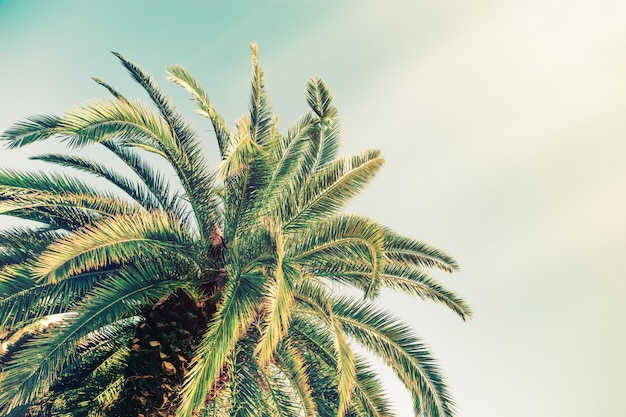 Weinlese tonte kokosnusspalme mit sonnenlicht