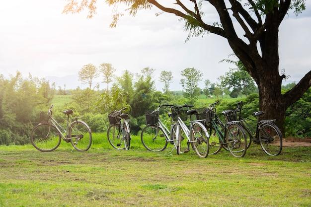 Weinlesefahrräder parken auf dem rasen im garten mit natürlichen ansichten