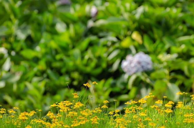 Weinlesefoto des löwenzahnfelds im sonnenuntergang