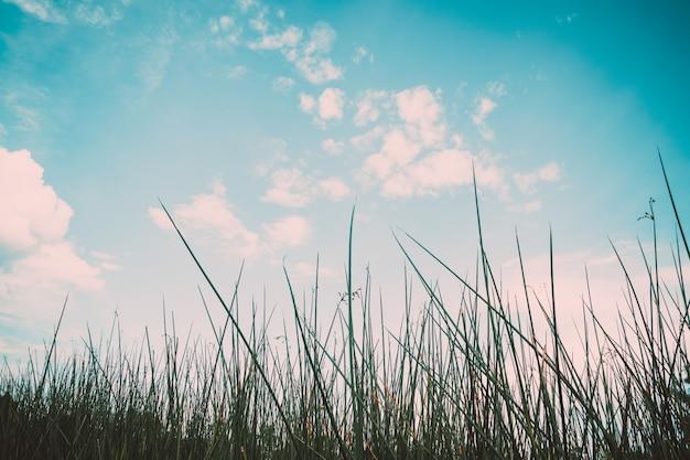 Weinlesernatur-hintergrundgrün der graspflanze und des himmelhintergrundes.