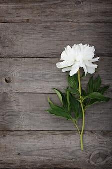 Weiß blühende pfingstrosenblume auf dem hintergrund der alten bretter