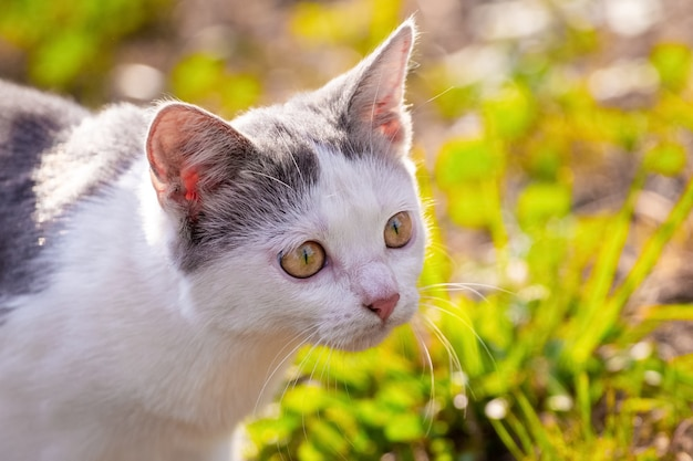 Weiß gefleckte katze mit genauerem blick aus nächster nähe im garten bei sonnigem wetter