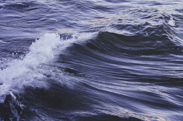 Weiße blaue ente, die in einem welligen dunkelblauen meer schwimmt