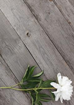 Weiße blühende pfingstrosenblume auf der oberfläche der alten bretter mit textur.