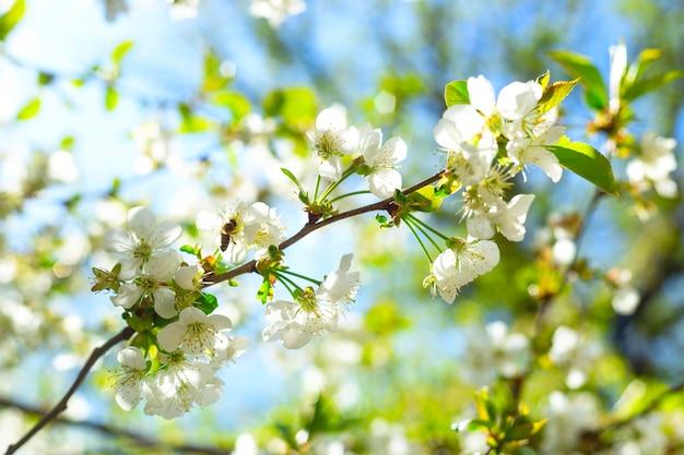 Weiße blühende zweige mit grünen blättern