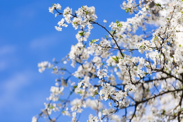 Weiße blüte des frühlinges gegen blauen himmel