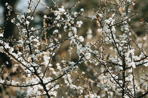 Weiße blüten auf zweigen