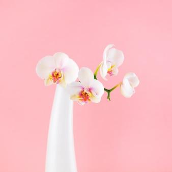 Weiße blüten der phalaenopsis in der glasvase