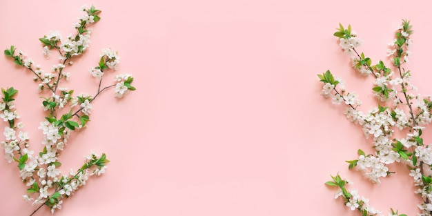 Weiße blütenniederlassungen des frühlinges auf rosa.