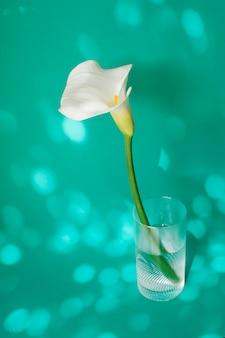 Weiße blume im glas mit wasser