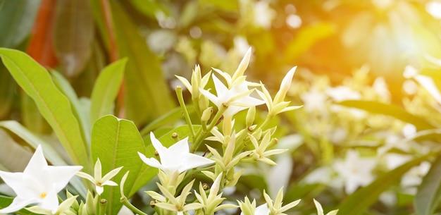 Weiße blume mit orangem licht