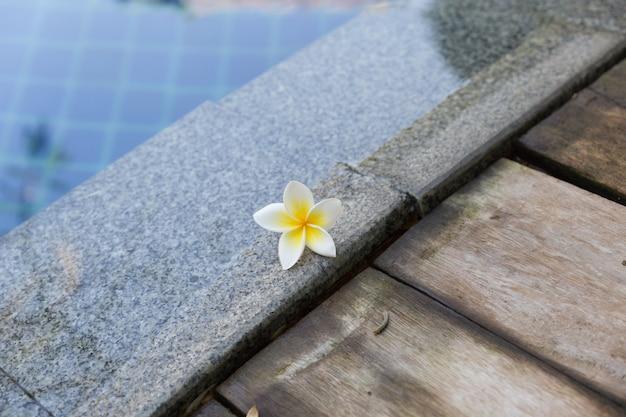 Weiße blume plumeria am schwimmbad