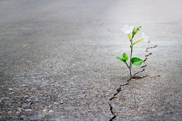 Weiße blume wächst auf crack street