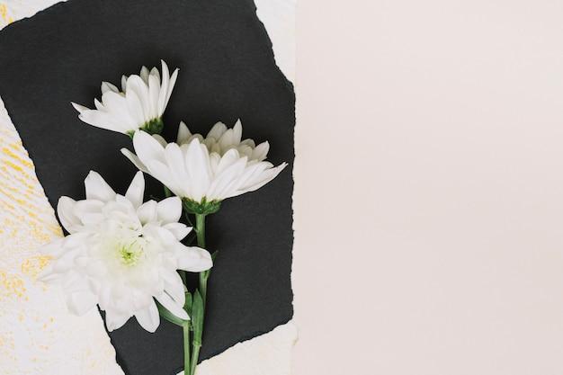 Weiße blumen auf schwarzem papierblatt