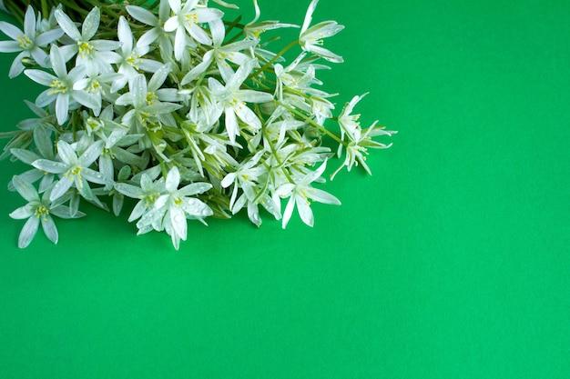 Weiße blumen des kleinen blumenstraußes auf dem grünen hintergrund