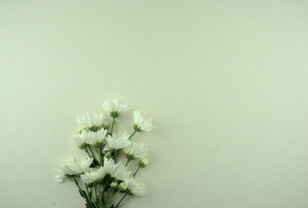 Weiße blumen flach auf grauweißem hintergrund.