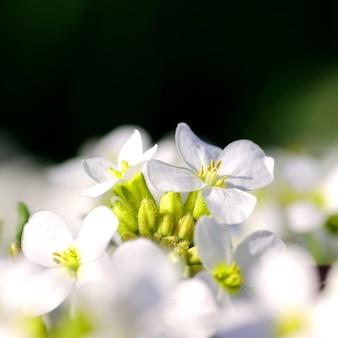 Weiße blumen in voller blüte