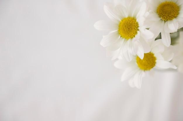 Weiße blumen mit gelben mitten