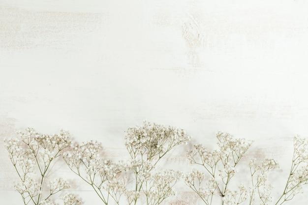 Weiße blumen mit weißem kopierraum