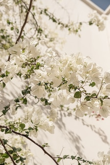 Weiße blumen pflanzen zweige und sonnenlichtschatten auf neutraler beige wand