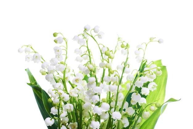 Weiße blumenlilien des tals lokalisiert auf weißem hintergrund