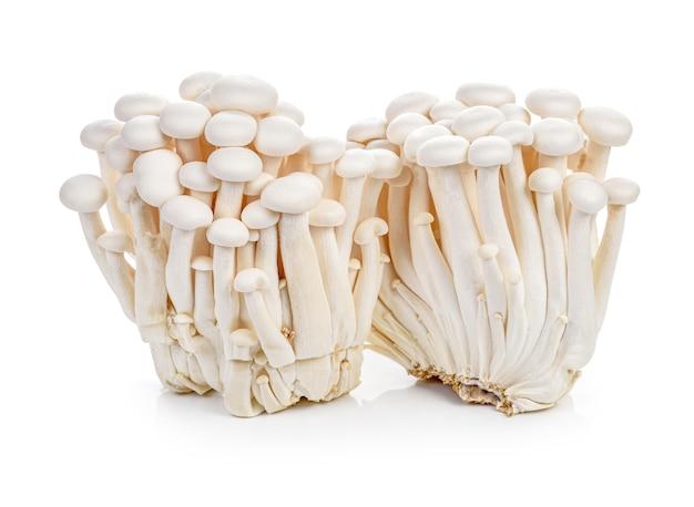 Weiße buchenpilze oder shimeji-pilze lokalisiert auf weißem hintergrund