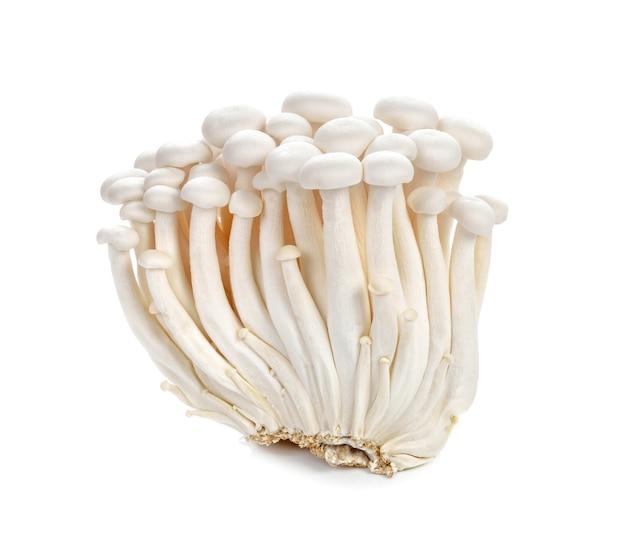 Weiße buchenpilze, shimeji-pilz, essbarer pilz lokalisiert auf weißem hintergrund