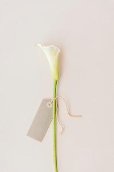 Weiße calla-lilie mit einer leeren grußkarte