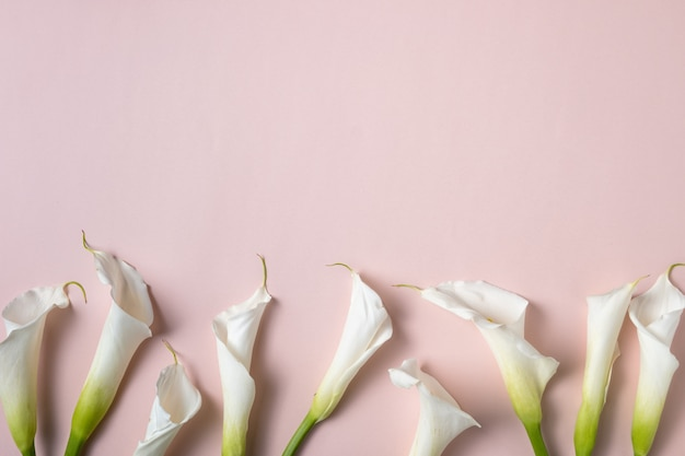 Weiße callalilien auf rosa hintergrund mit kopienraum