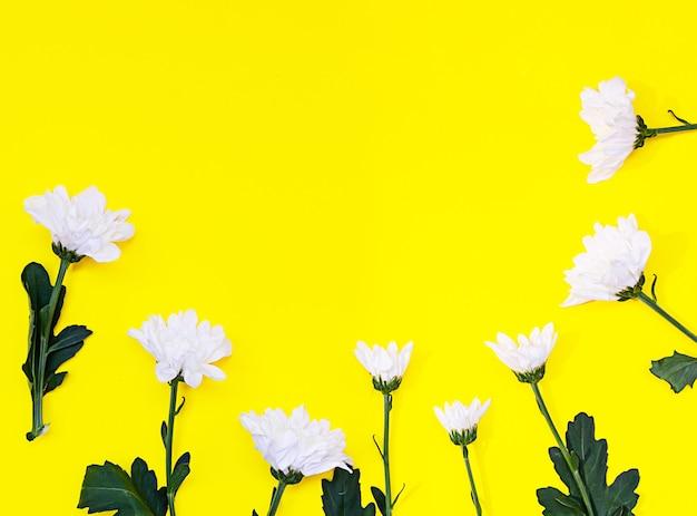Weiße chrysantheme auf gelbem hintergrund. herbstblumen. blumenhintergrund. flach liegen. speicherplatz kopieren.