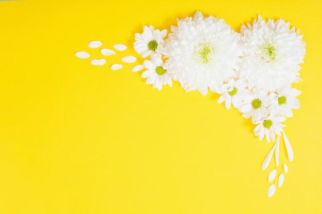 Weiße chrysantheme auf gelbem papierhintergrund