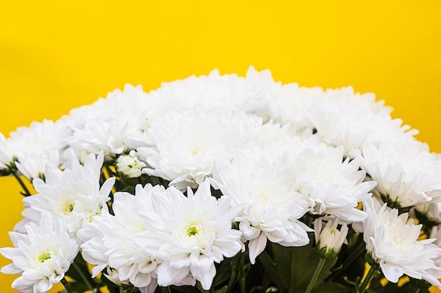 Weiße chrysantheme auf gelber wand. herbstblumen.