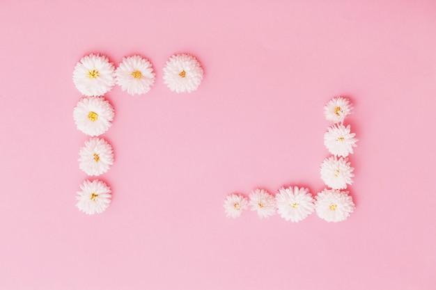 Weiße chrysanthemen auf rosa papierhintergrund
