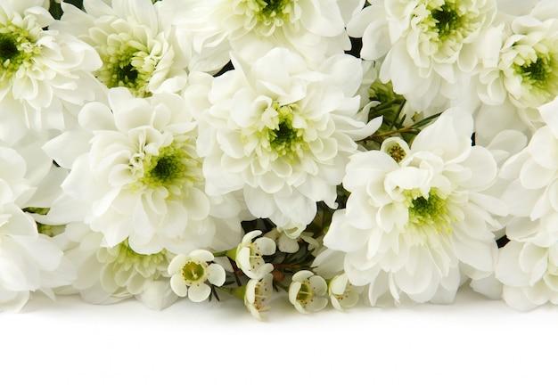 Weiße chrysanthemen über weiß
