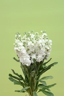 Weiße delphiniumblume für hintergrund