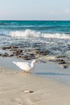 Weiße ente auf einem sandstrand mit einem türkisfarbenen meer im sonnigen. schöne landschaft.