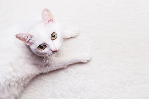 Weiße erwachsene katze mit gelben augen auf einem weißen weichen teppich