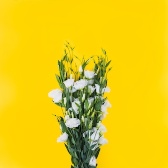 Weiße eustomablumen gegen gelben hintergrund