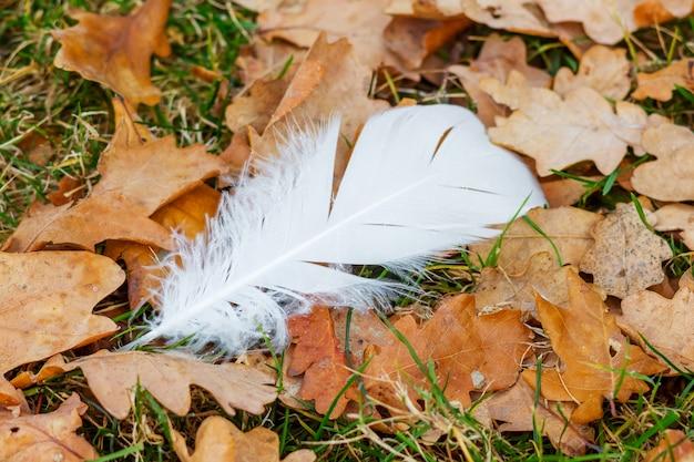 Weiße federn auf einem trockenen herbstblatt