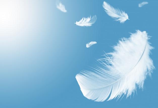 Weiße federn, die in einen blauen himmel schwimmen.