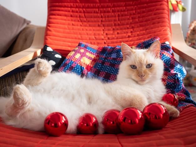 Weiße flauschige katze, die auf rotem stuhl mit weihnachtskugeln liegt