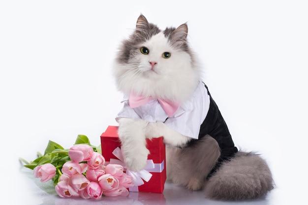 Weiße flauschige katze mit einem strauß rosa tulpen und einer roten schachtel mit einem geschenk