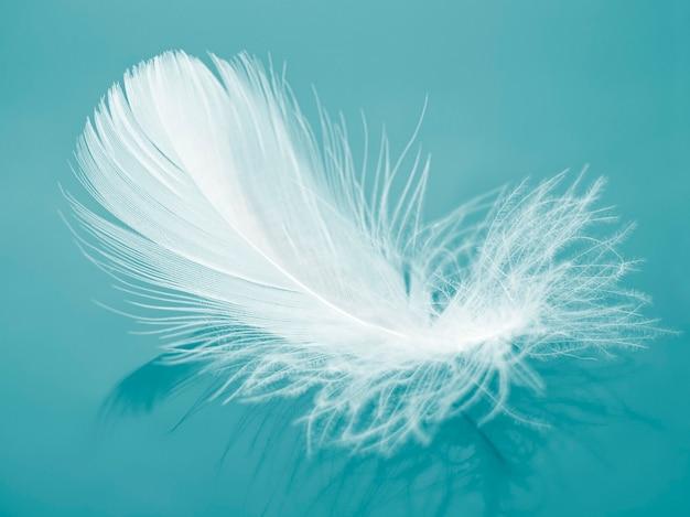 Weiße flauschige vogelfeder auf blauem hintergrund