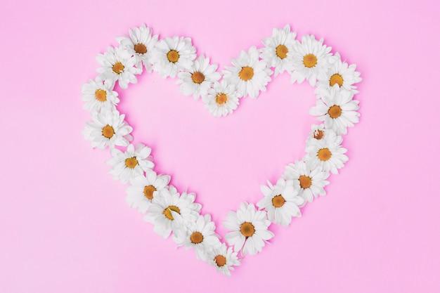 Weiße gänseblümchen in der anordnung auf rosa hintergrund