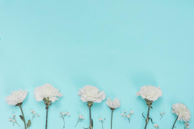 Weiße gartennelkenblumen auf blauer tabelle