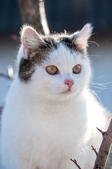 Weiße gefleckte katze auf einem baum im sonnigen wetter